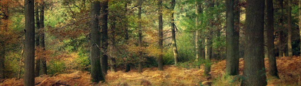 Mynydd Timber Services